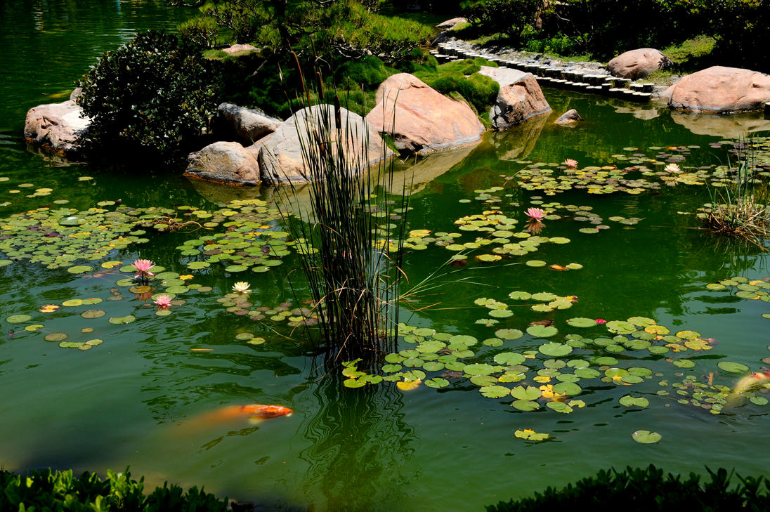 Japanese koi pond with lilies by andyserrano on deviantart for Japanese pond garden