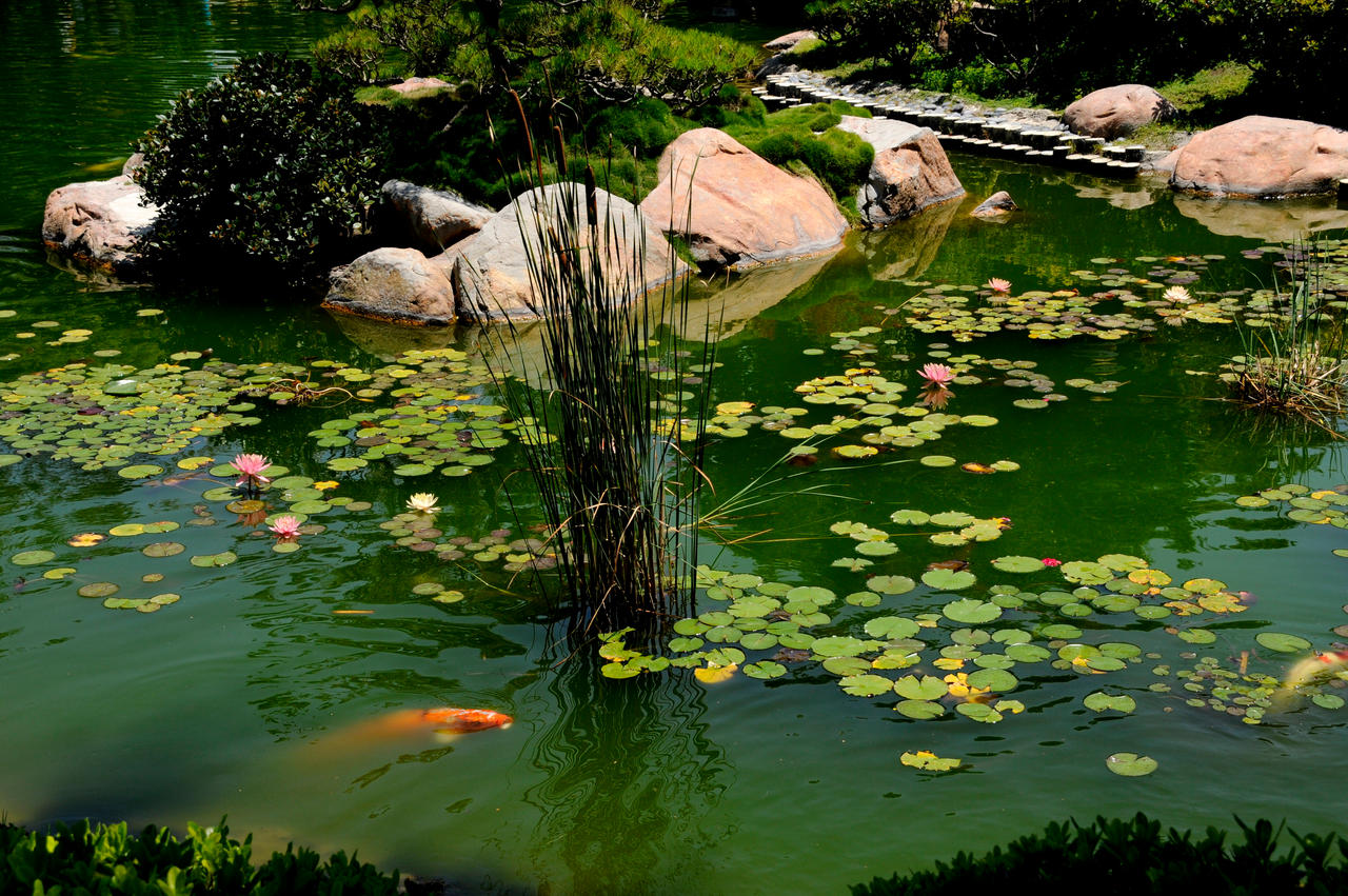Japanese koi pond with lilies by andyserrano on deviantart for Koi pond garden
