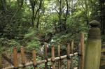 Meiji Jingu Park in Shibuya