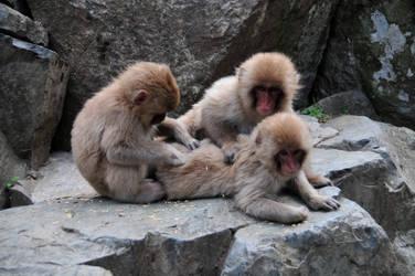 Jigokudani Preening Snow Monkeys by AndySerrano