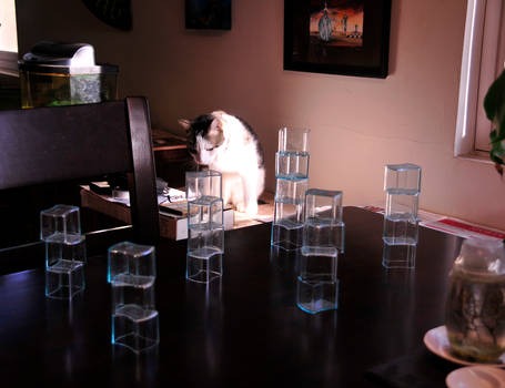 Cat with Plastic Towers