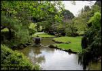 Japanese Garden 5 Pond