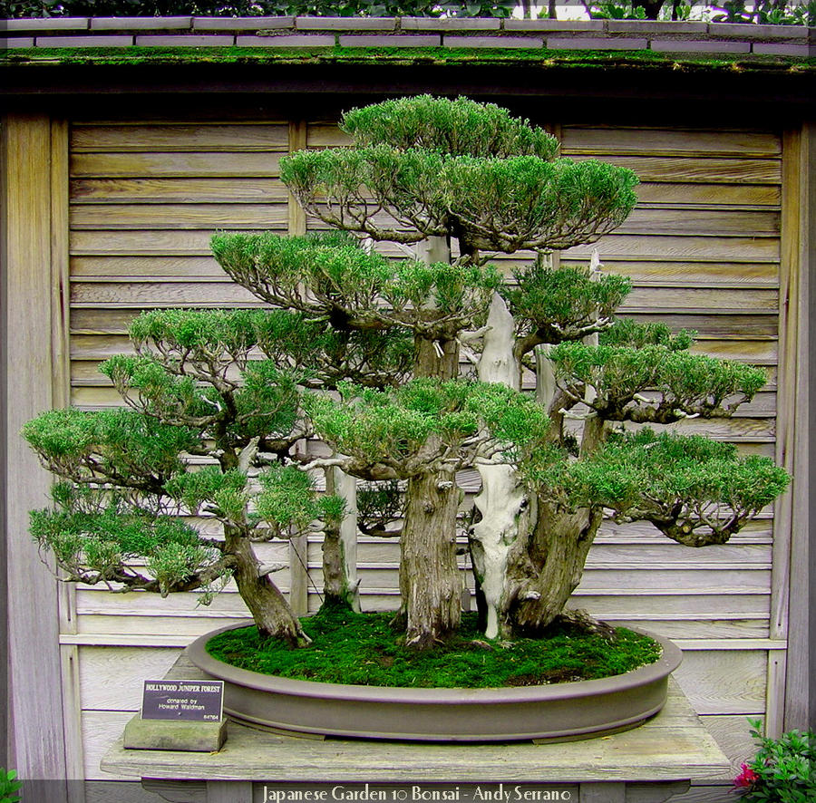 Japanese garden 10 bonsai by andyserrano on deviantart for Japanese garden plants and trees
