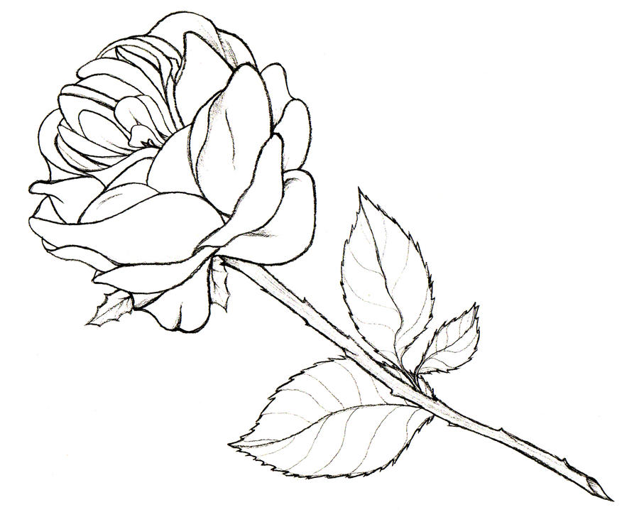 how to draw a really good rose