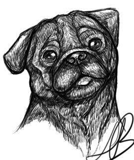 Pug Drawing by HotrodsImpulse