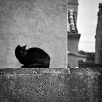 black cat and white by jurcic