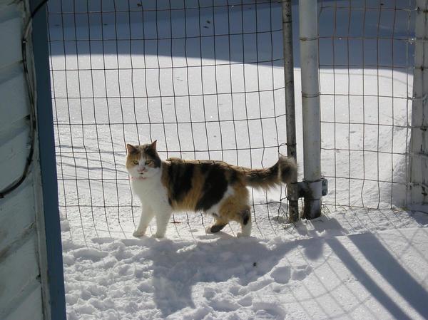 Sad Kitten in Snow