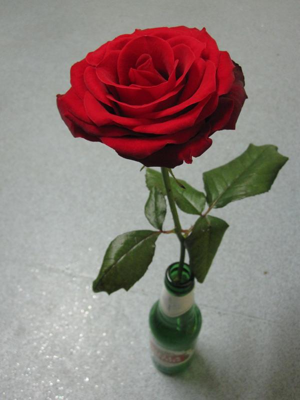 Love is a flower in a beer bottle by lilfixit