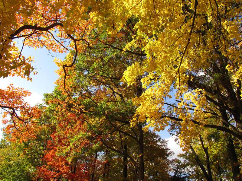 Autumn Palette by lilfixit