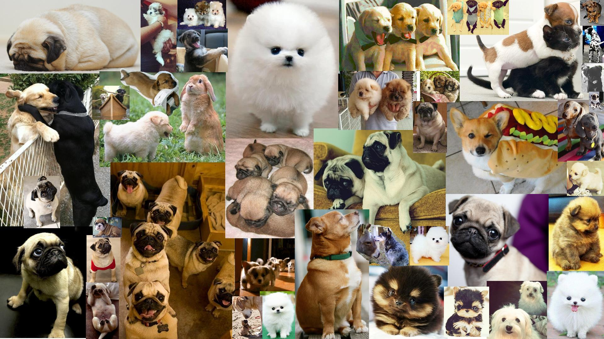 puppydog collage wallpaper by foggypebble puppydog collage wallpaper by foggypebble