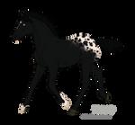 8123 Black Cat