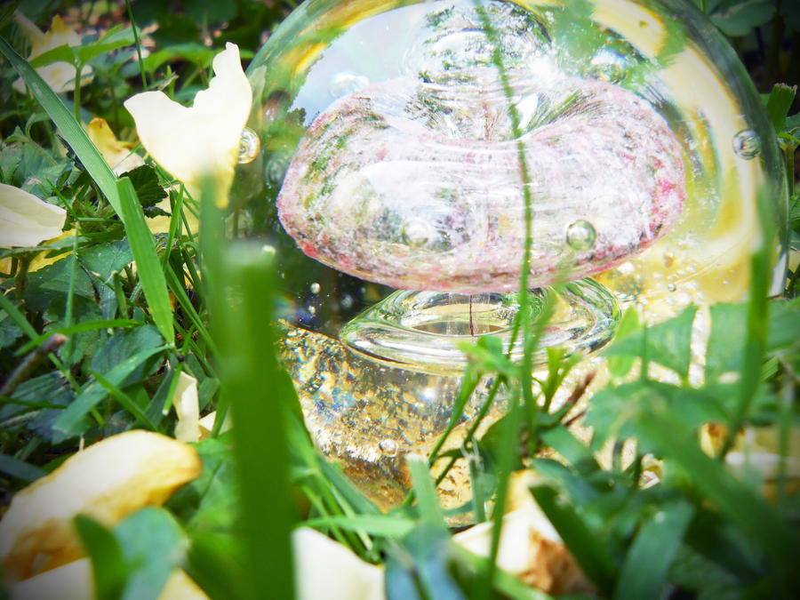 Petals on Glass