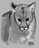 Cougar Sketch by saltwaterhermit