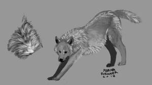 Fur Studies 4-5