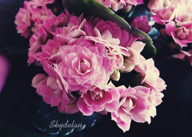 Pink and Black by Skydelan