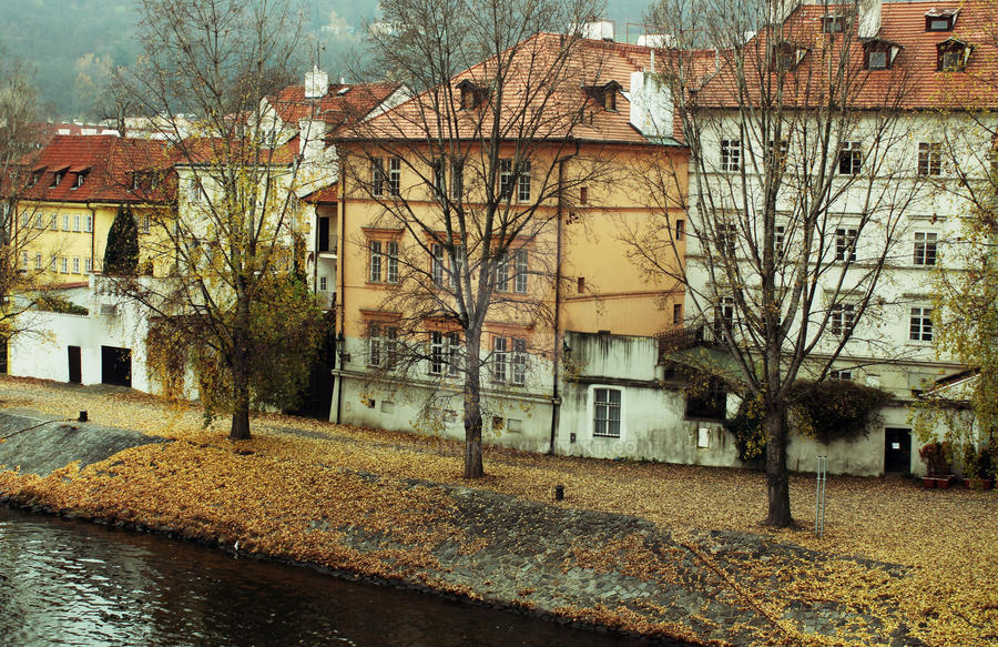 Riverbank Leaves in Praha by SlamDunkin