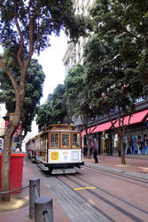 Trolley through the Trees
