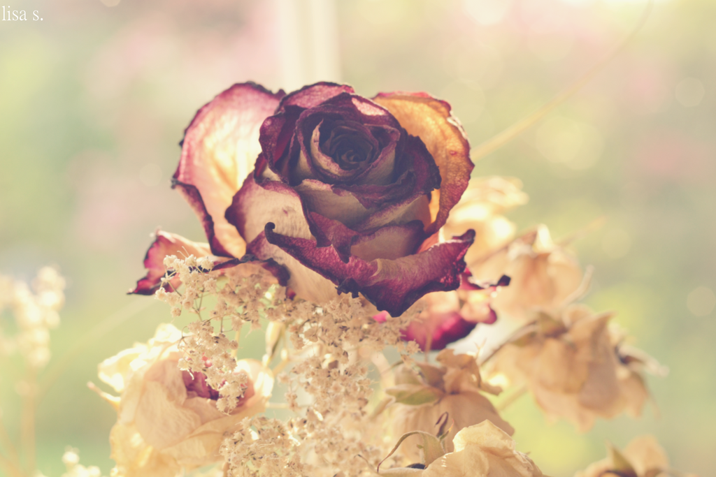 Vintage Rose By Photography2and1art