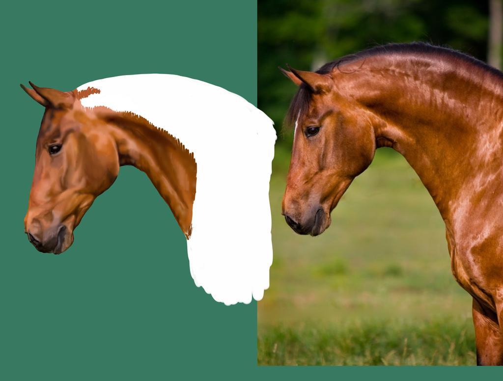 Realistic Horse w.i.p. by Silverdraken on deviantART