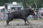 Bull vs Bell