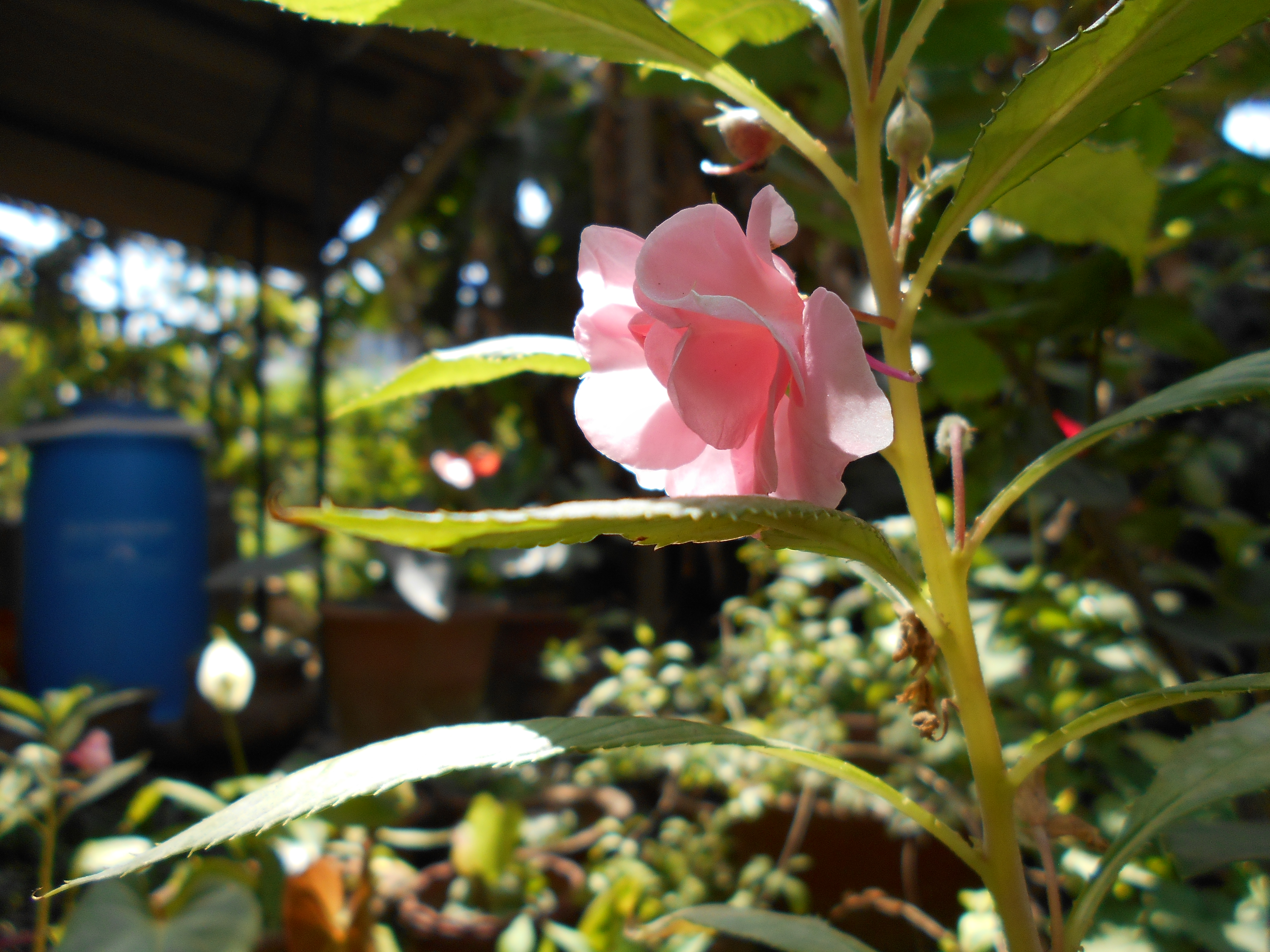 blossom by SheenMagic