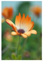 Orange by liiian