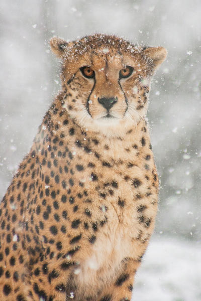 Snowy Portrait by darkSoul4Life