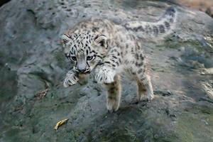 Leaping Kitten by darkSoul4Life