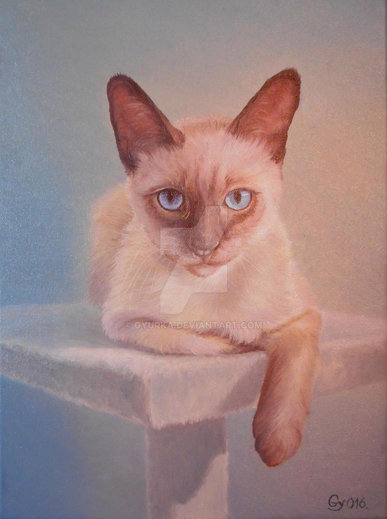 Cat by gyurka
