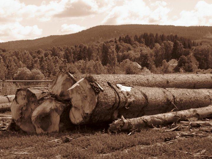 tree by dpaulo