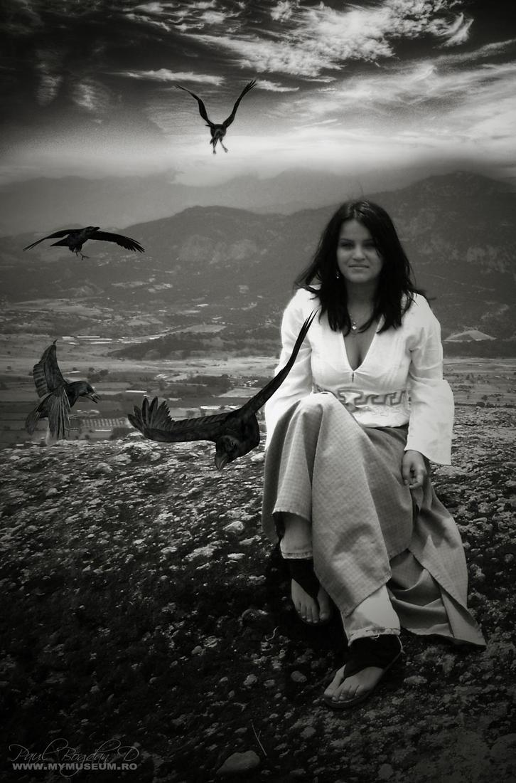 Birds by dpaulo