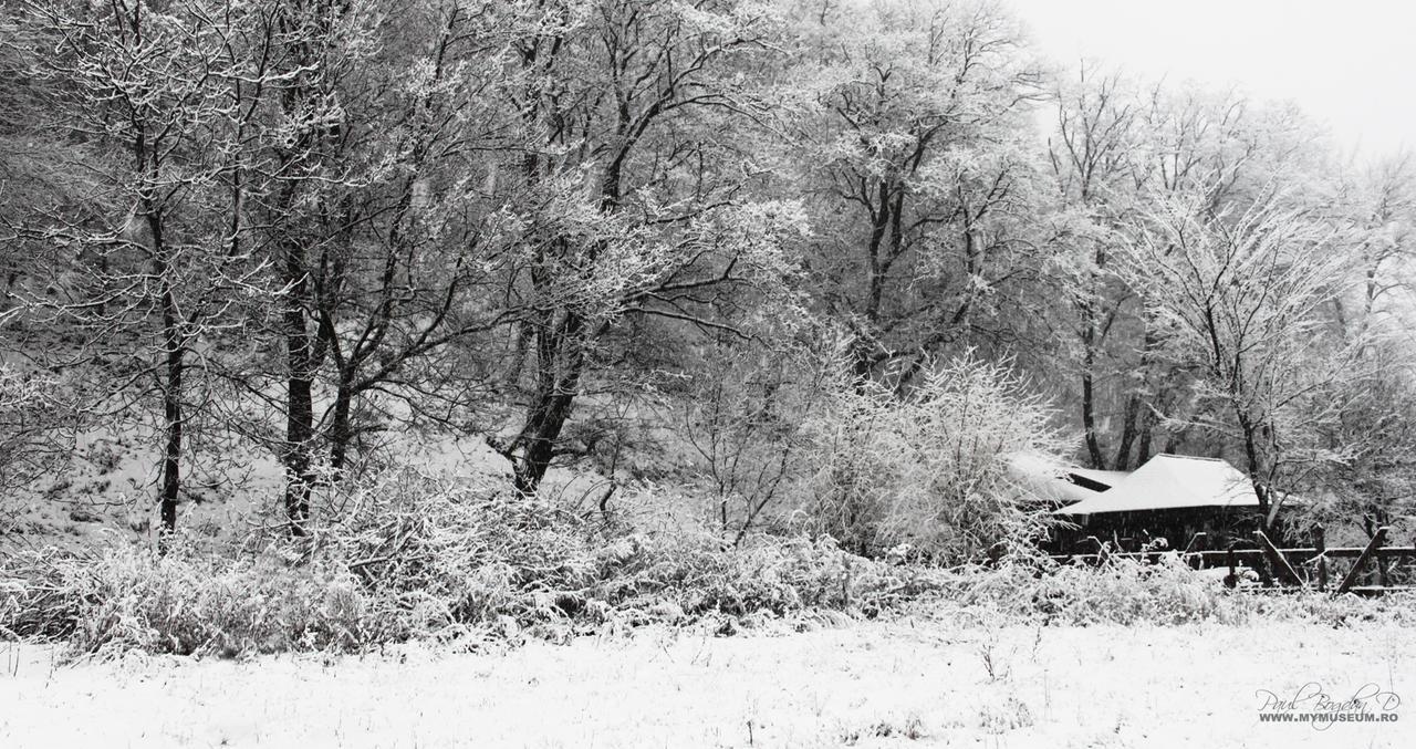 Winter 2 by dpaulo
