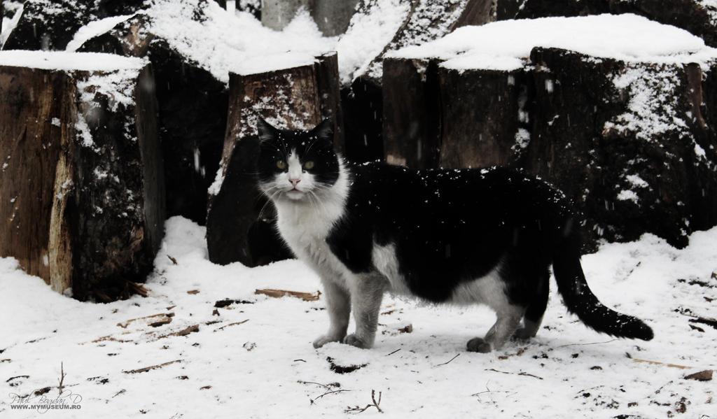 Black n White Cat by dpaulo