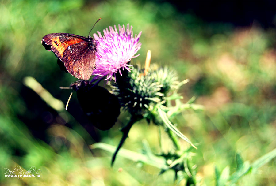 Butterfly by dpaulo