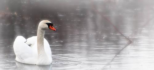 Swan by Kyckling