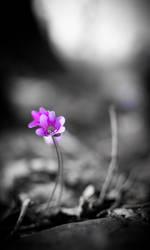 Purple by Kyckling