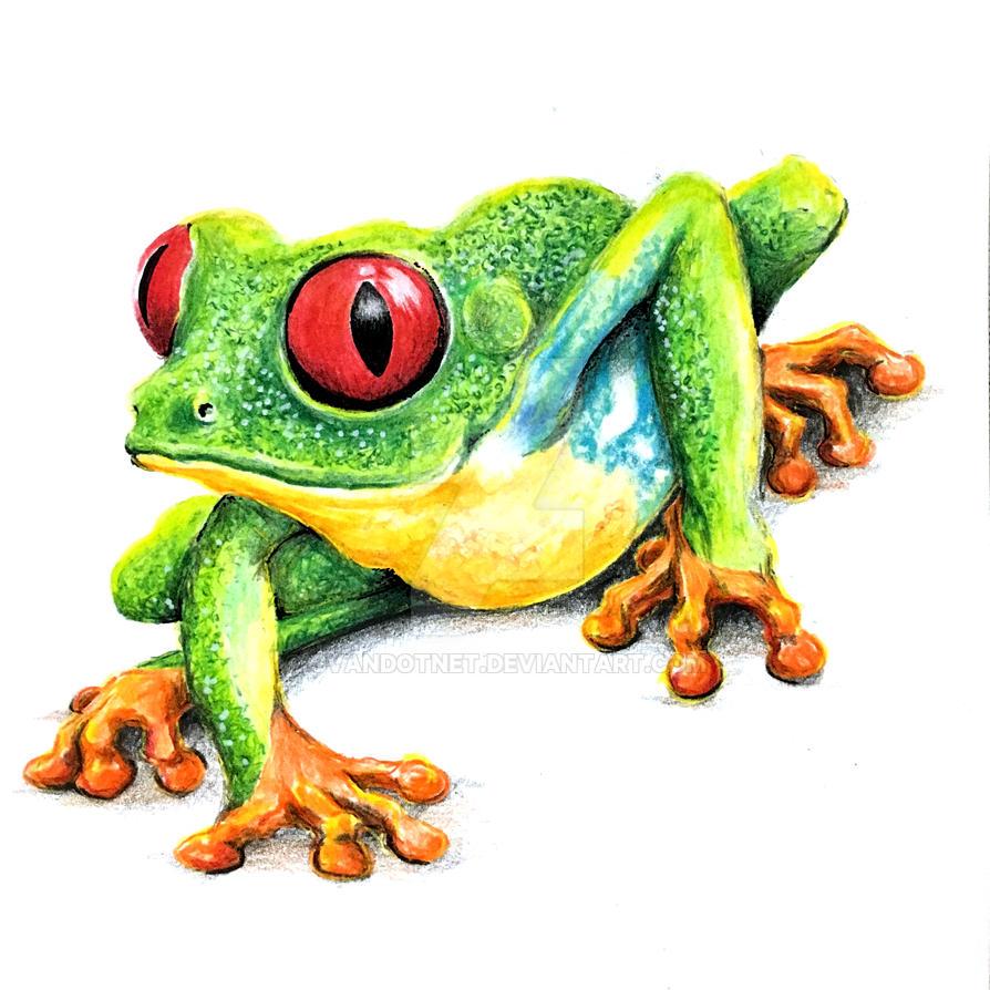 Green Leaf Frog by cvandotnet
