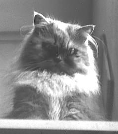 ienaserena's Profile Picture