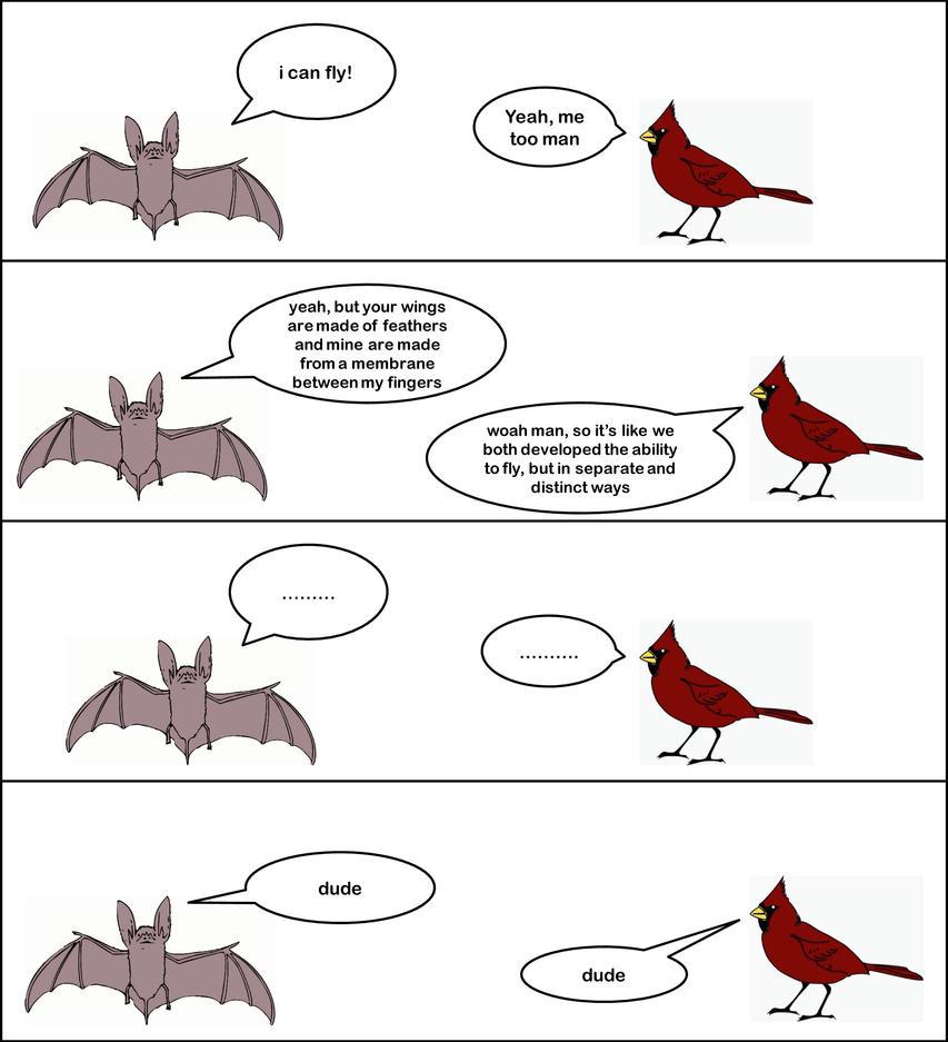 Convergent Evolution by sciencemeetsart