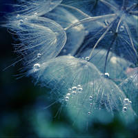 Daydreaming by anna-earwen