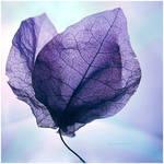 Frail Heart of Autumn by anna-earwen
