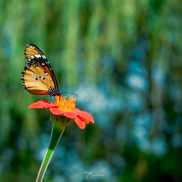 Summer Bliss II by anna-earwen
