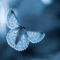 Butterfly Blues by anna-earwen