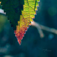 Touch of Autumn by anna-earwen