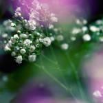 Tenderly by anna-earwen