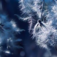 Summer Snow by anna-earwen