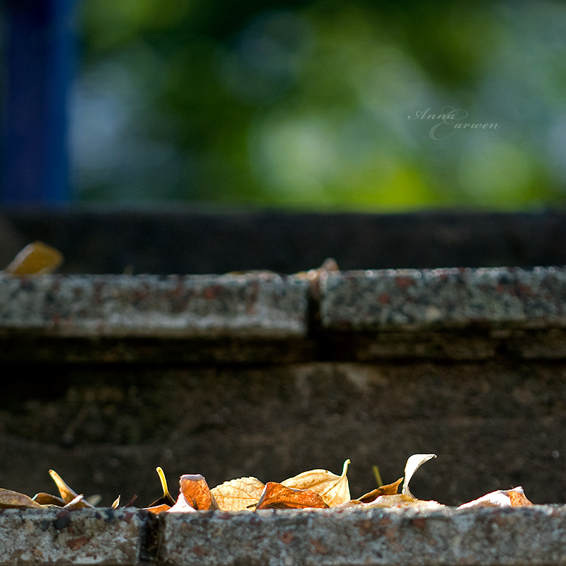 Autumn, step by step by anna-earwen