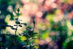 Joy of Living by anna-earwen