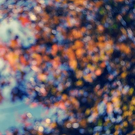 Fall by anna-earwen