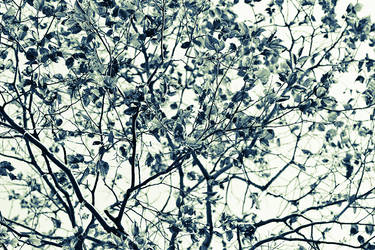 Trees are Fractal Structures by anna-earwen